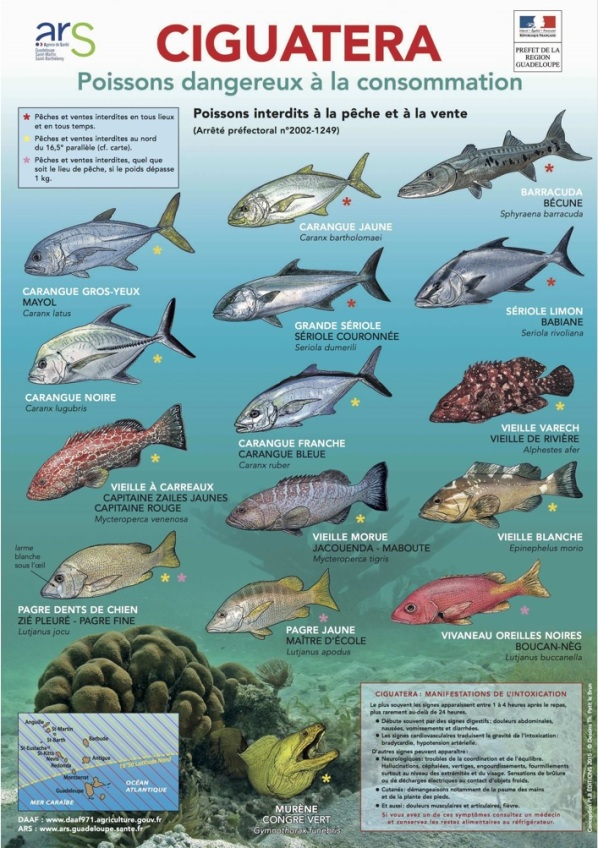 ciguatera_poissons_dangereux_guadeloupe_martinique_ars_daaaf_01